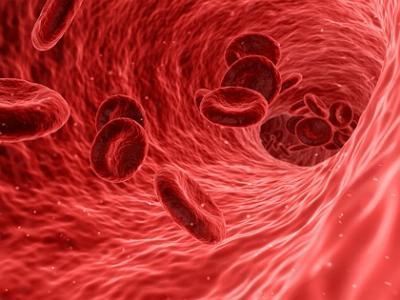 Rote Blutkörperchen