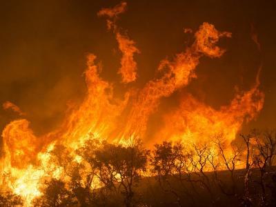 meterhohe Flammen vernichten einen Wald