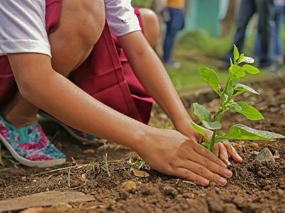 Kind pflanzt einen Baumsetzlig ein